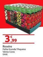 Oferta de Rosa por 3.99€