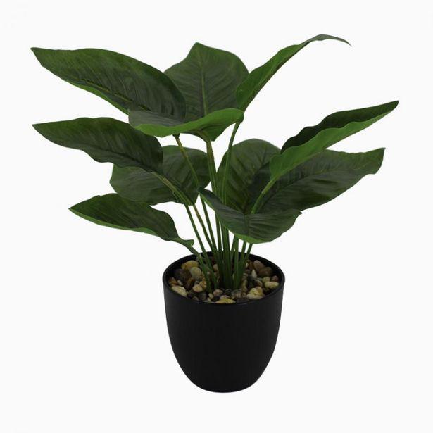 Oferta de Planta Artificial BANANA A.42cm por 15,99€